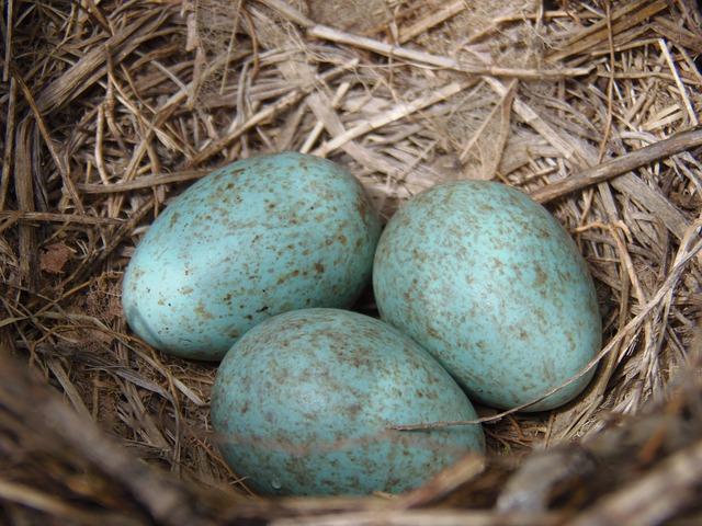 Od czego zależy barwa i wartość odżywcza jaj?