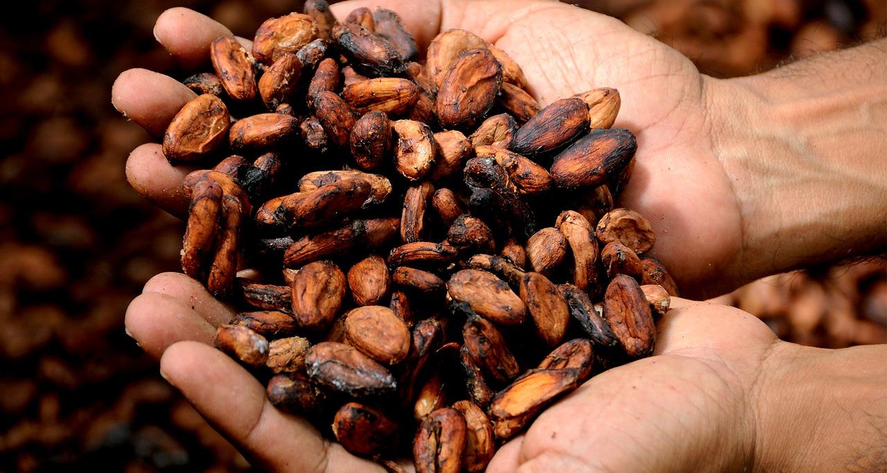 ziarna kakao