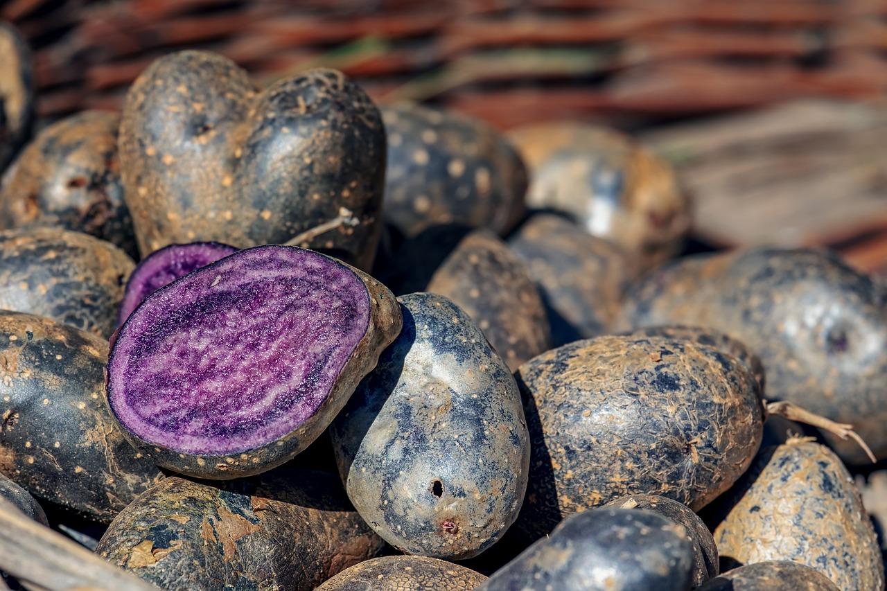 Jakie zagrożenia mogą wyniknąć ze spożywania ziemniaków?
